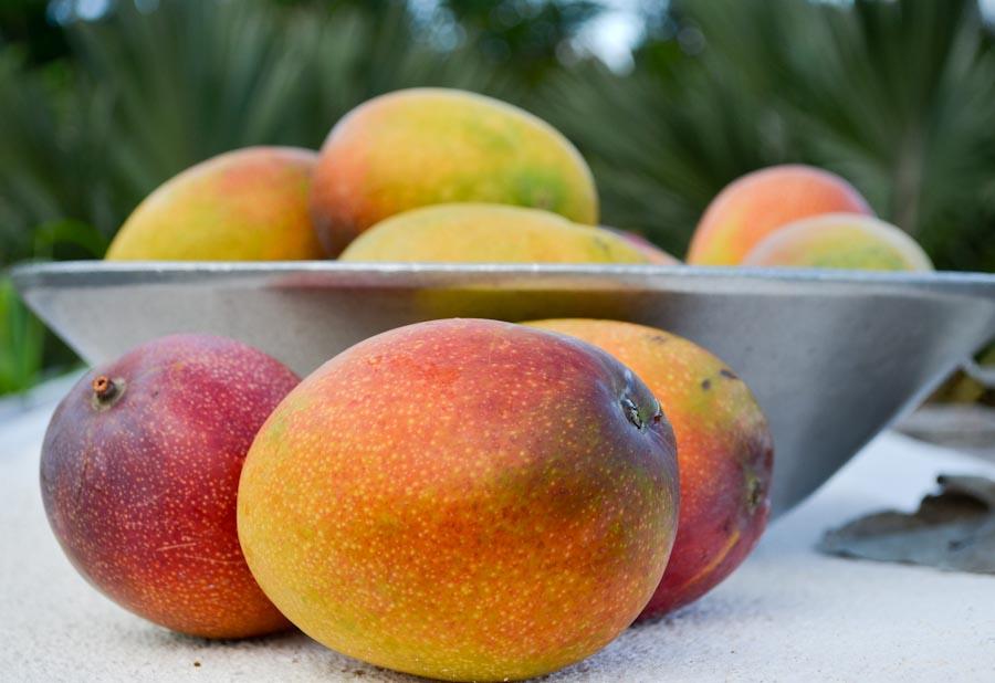Maui Mangos No Ka Oi